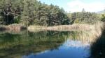 les étangs du parc